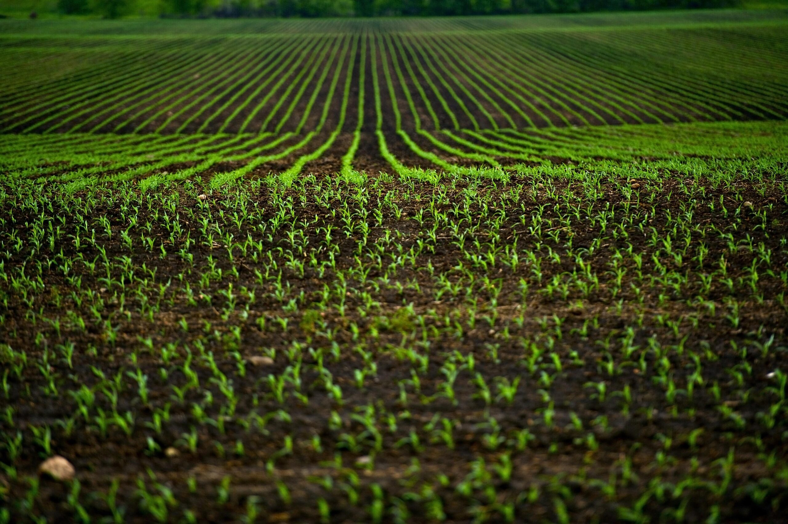 830 de milioane dinari pentru producția vegetală și zootehnie