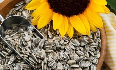 AGRICULTORII AU MOTIVE SĂ FIE MULȚUMIȚI: Prețuri bune la floarea-soarelui și soia