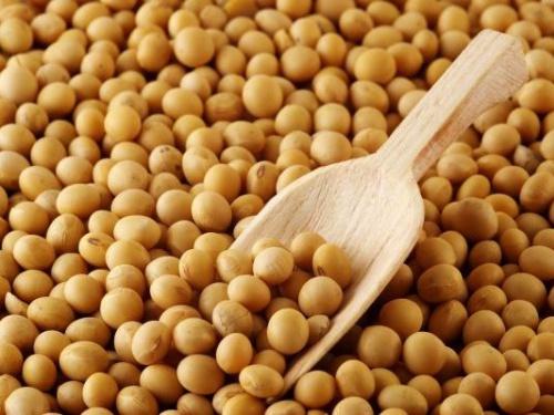 BURSA DE PRODUSE AGRICOLE: Scade prețul la soia
