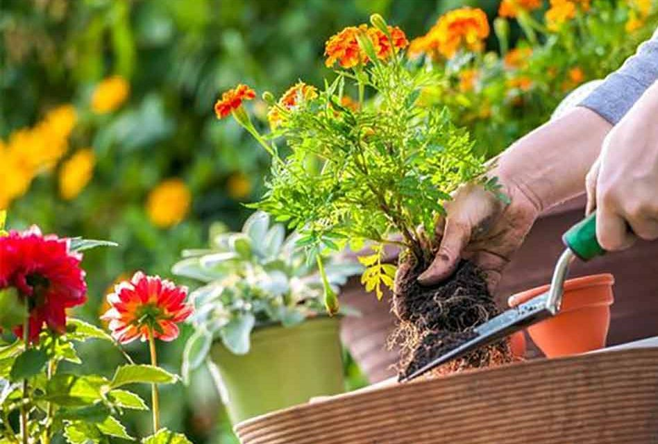 Toamna plantăm lalele și narcisele