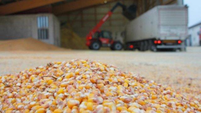 BURSA DE PRODUSE AGRICOLE: Oscilări de prețuri la porumb