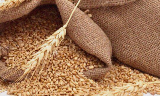 De ce cresc prețurile la grâu și porumb?