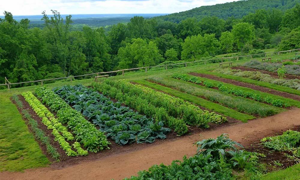 Cerințele legumelor pentru sol și hrană