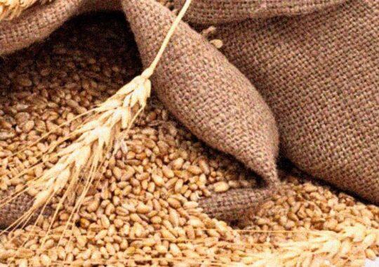 Agricultura a răspuns cel mai bine la criza provocată de COVID-19