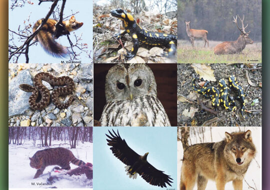 Control mai mare în zonele de protecție ale Munților Vârșețului