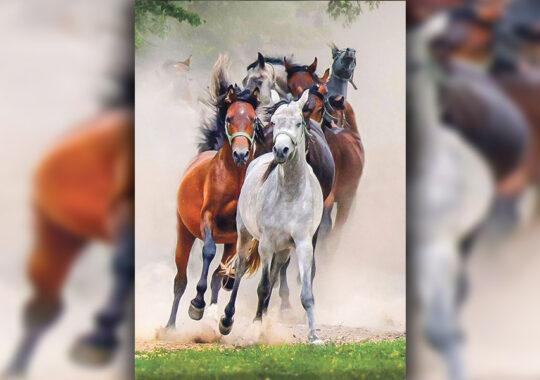 Săptămâna Cailor lui Sân-Toader