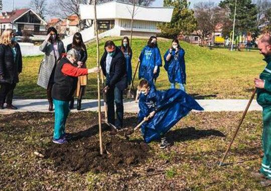 300 de puieți noi în mai multe locații din Zrenianin
