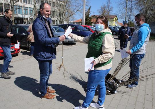 Au fost distribuiți puieți de frasini cetățenilor