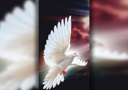 1 Aprilie – Ziua Păcălelilor şi Ziua Internațională a Păsărilor