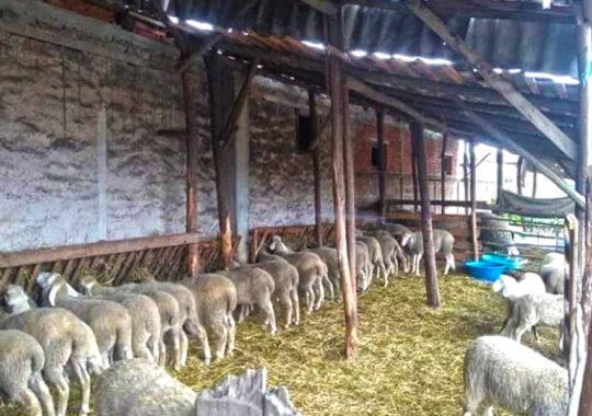 Crescătorii de animale din Dupljaja nu mai au păşune