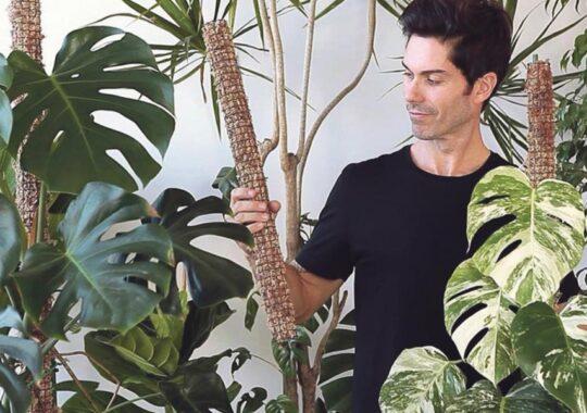 Plantele ne umple viaţa de sentimente pozitive